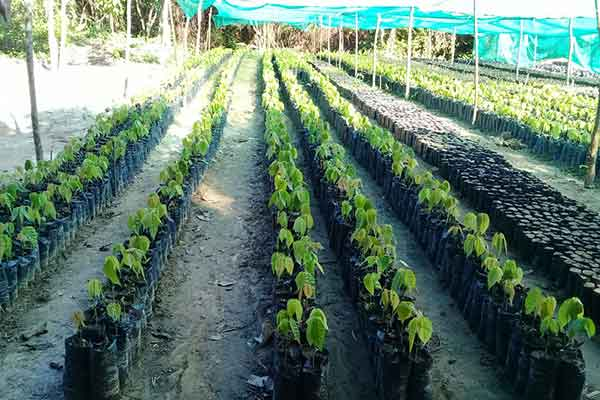 produccionverde02