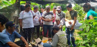 Proceso de injertación de Paltos para mejorar la economía familiar de productores comprometidos con la estrategia CERO DEFORESTACION.-Huànuco-Perù