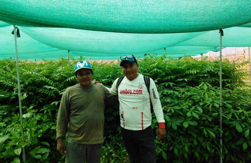 Instalación de sistemas agroforestales en las comunidades Santa Flor, Nueva Control y Contralmirante Grau, del Bajo Biabo, Bellavista-San Martín