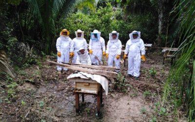 Instalación de módulos de apicultura en comunidades de Bajo Biabo de la Región San Martín-Perú